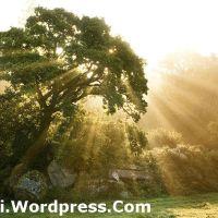გიორგი ლეონიძე – ჩვენი ჭერამი